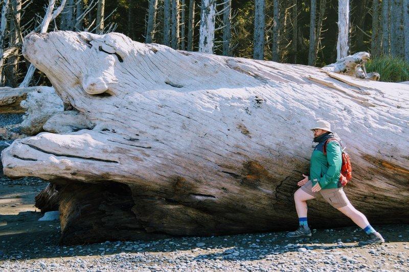 Huge driftwood everywhere.