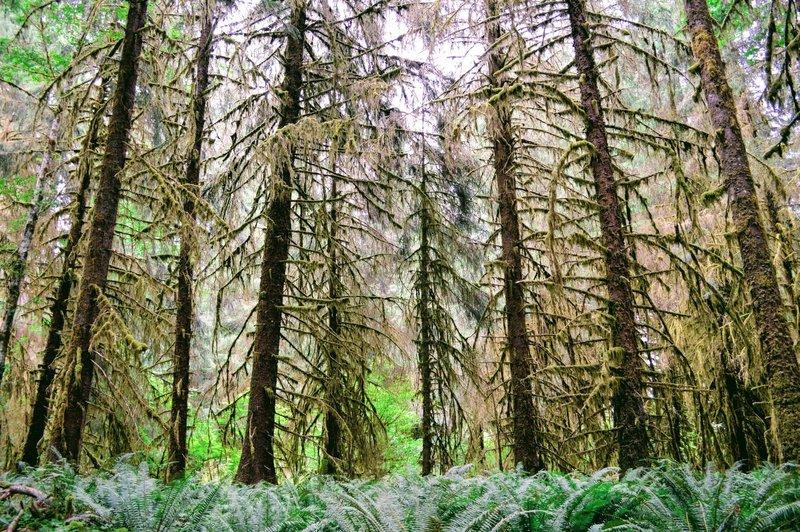 Ferns & mosses everywhere.