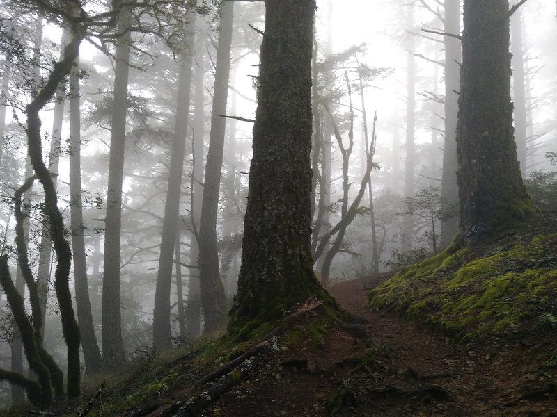 Near the top of the Matt Davis climb in characteristic mist