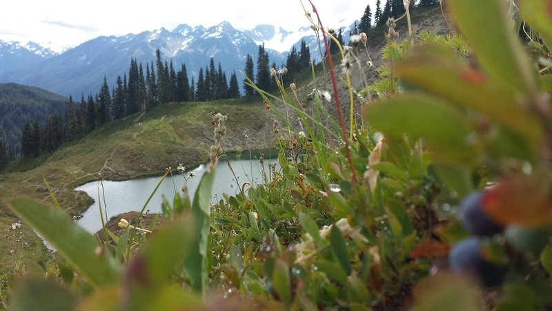 View of Swimming Bear Lake from the blueberries' perspective. Mt. Olympus in the background