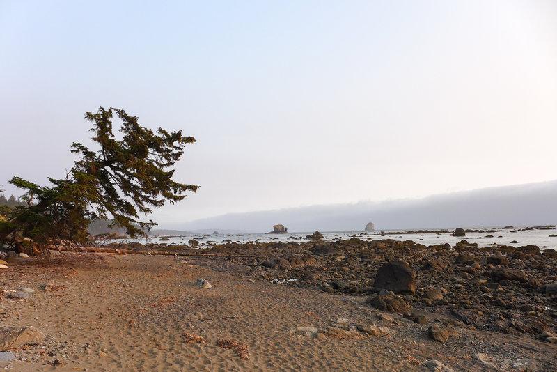 The beautiful Olympic Peninsula coast