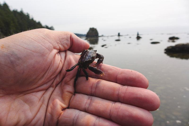 Found a lil crab daddy