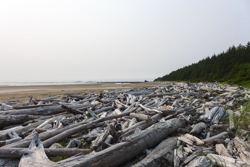 So much driftwood along this section of the cove.