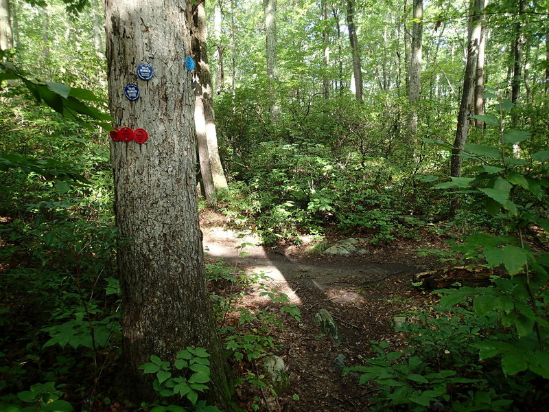 Fahnestock Trail and Charcoal Burner Trail share the same path until just after Beaver Pond.