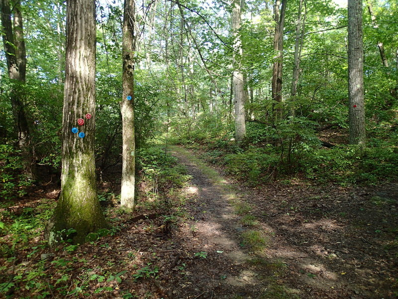 Fahnestock Trail and Charcoal Burner Trail parting ways