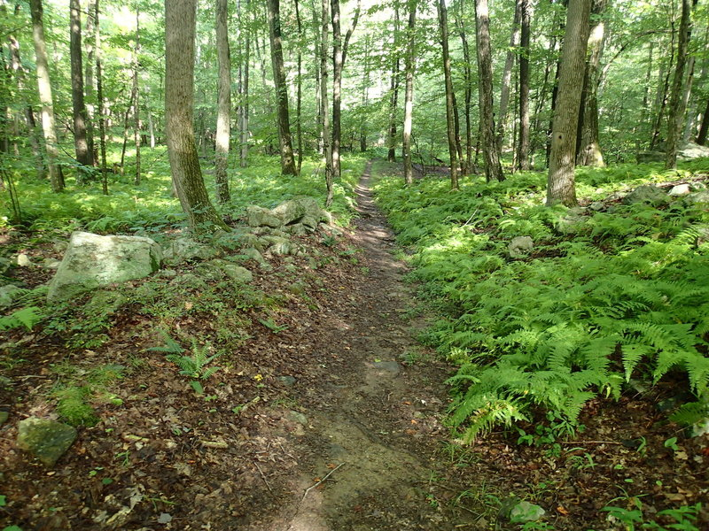 Fahnestock Trail