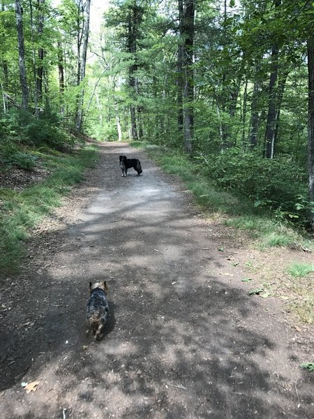 Two dogs enjoying a nice day on the trail