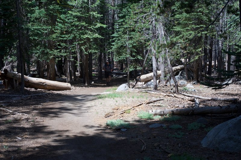 The trail flattens out as it winds its way through the trees.