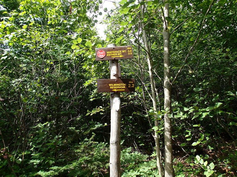 Whiteface Mountain Trail