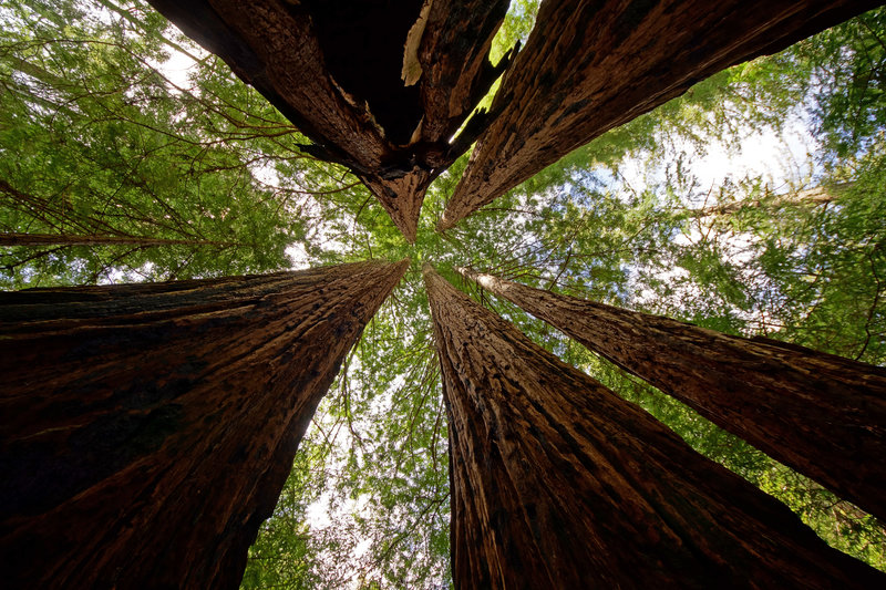 It's hard to beat a canopy of redwood trees!
