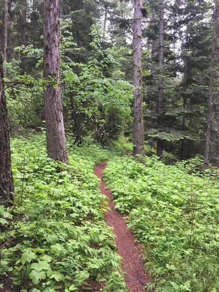 Caribou Ridge Trail near Beauty Bay, Lake Coeur d' Alene, Idaho