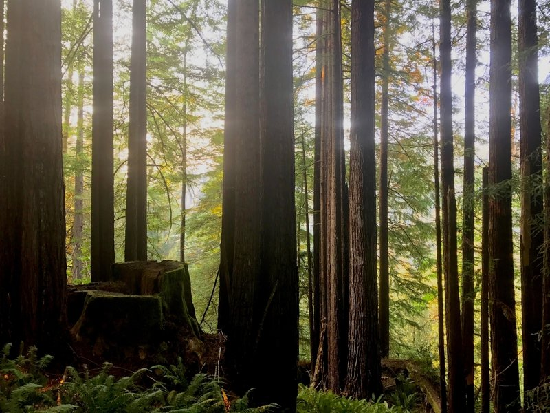 Saddler Skyline is easy to access from the Mill Creek Campground in the Del Norte section of Redwood National and State Parks. And it connects to the other campground-area trails, such as Hobbs Wall and Trestle Loop.