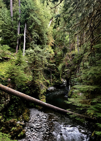 View of Quinault River from Pony Bridge. Saw some side trails that look like they take you down to the water.