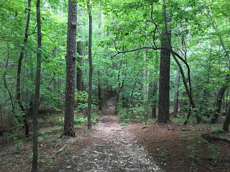 Looking Down the Trail - Sal's Branch Trail - William B. Umstead Park