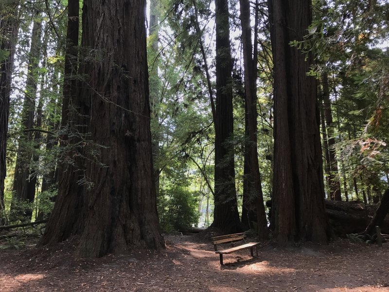 Bench on Tall Trees Trail in Redwood National Park