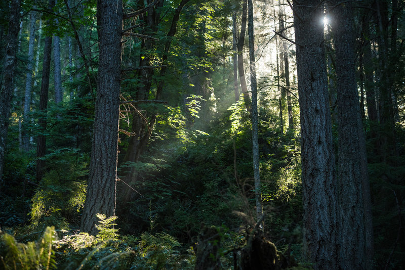 Early morning rays pass between the trees on Two Dollar.