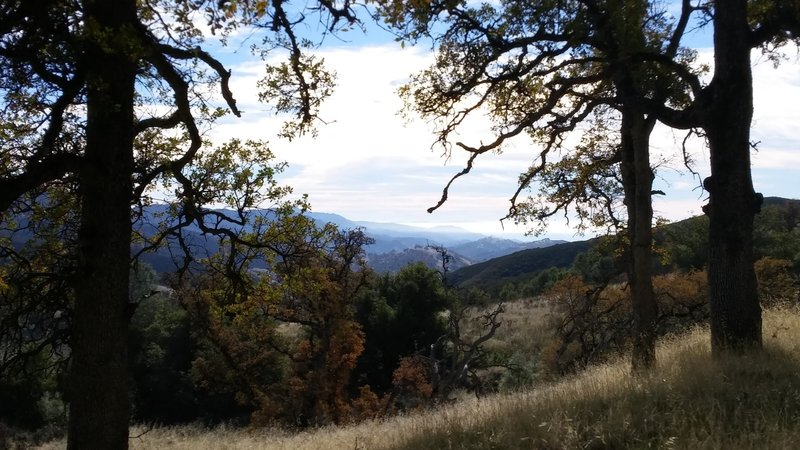 Oaks turning colors in late November- along the Long Canyon Trail