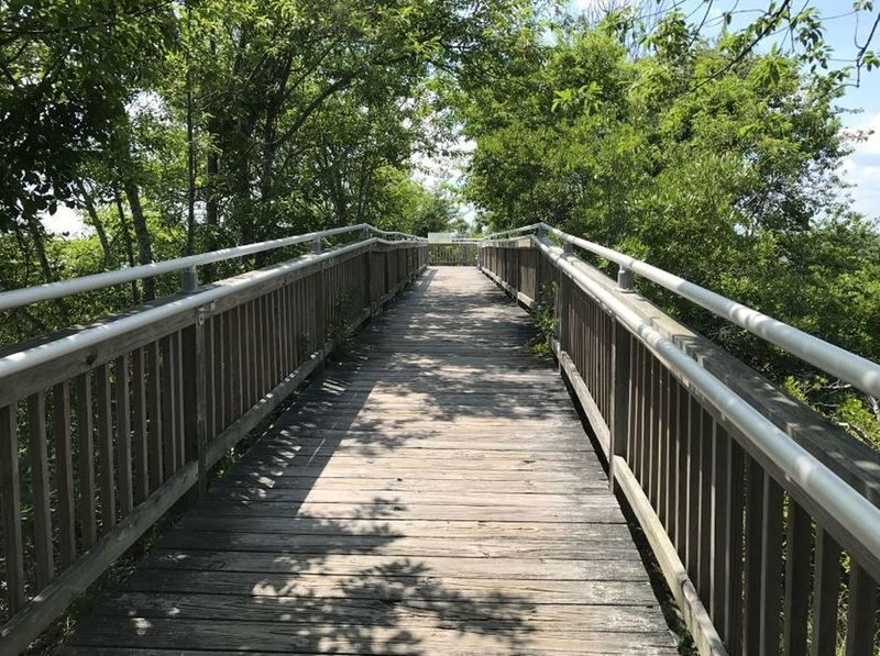 Boardwalk section of Life on the Marsh Trail.