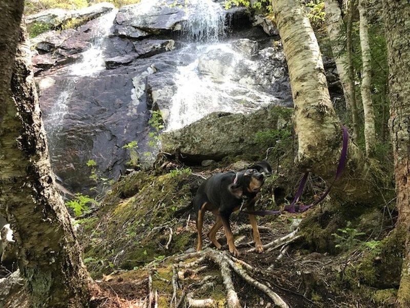 Fletcher's Cascade - Final Waterfall