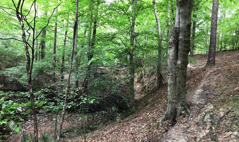 The trail winding along Pea Creek
