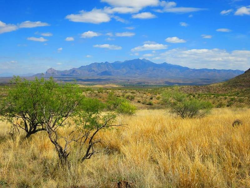 Enjoy great views of the Santa Ritas from the trail.
