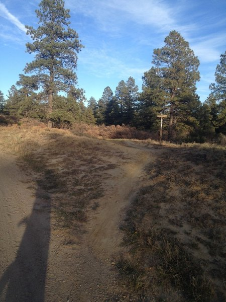 Start of the singletrack.  Turn right off of the road and head into the trees.