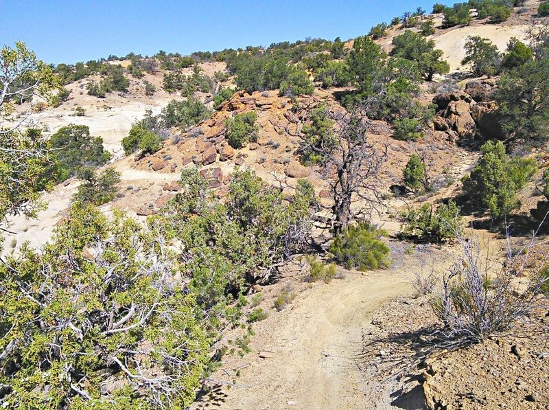 Singletrack contours along the edge of Pinon Mesa in this section