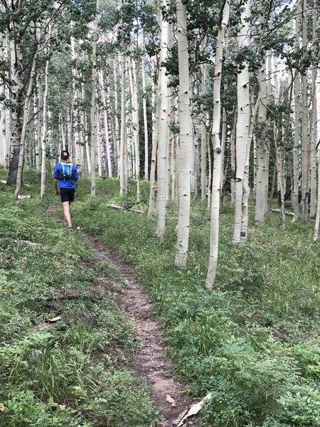 You'll wind through several beautiful Aspen groves along the trail.