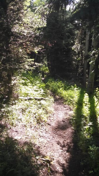 Upper Paradox Singletrack