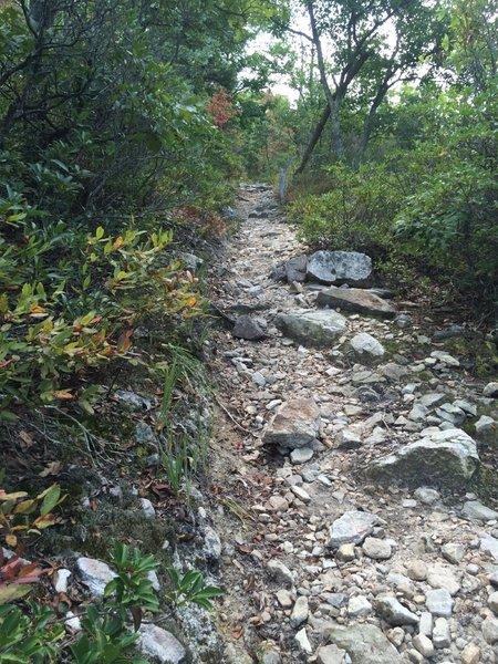 Steep, rocky trail (Tuscarora) heading back to the ridge