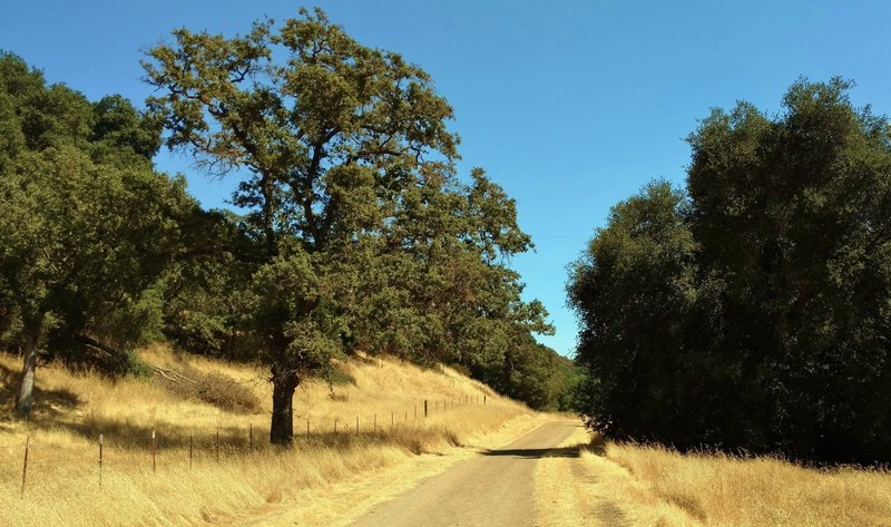 Longwall Canyon Trail runs through the golden summer grass of Calero County Park near its trailhead.