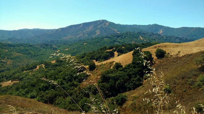Loma Prieta at 3,786 ft., and other Santa Cruz Mountains are the backdrop to the grass and wooded hills of Rancho Canada del Oro, looking southwest from Bald Peaks Trail