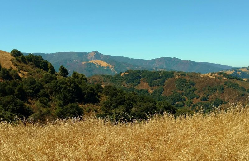 Mt. Umunhum of the Santa Cruz Mountains, in the distance (left center) when looking west from Bald Peaks Trail.