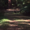 A wallaby in Olinda