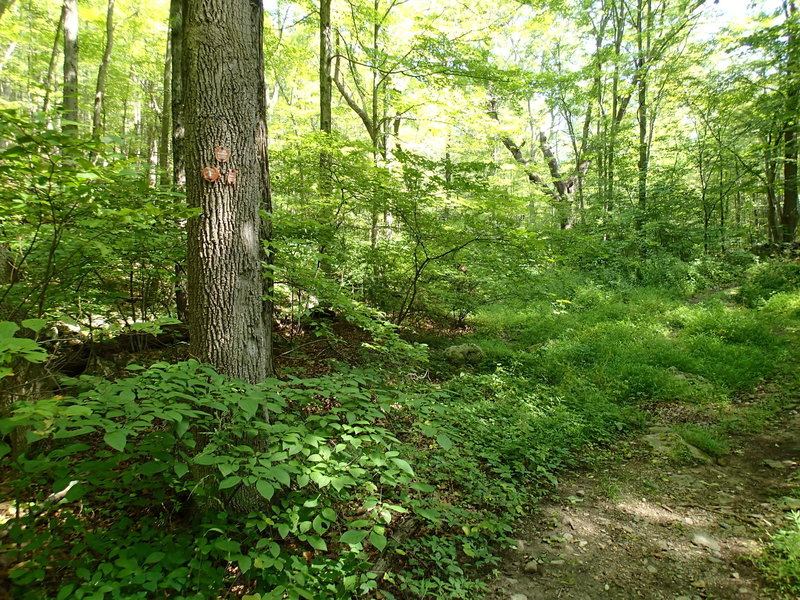 Start/End of East Mountain Loop Trail