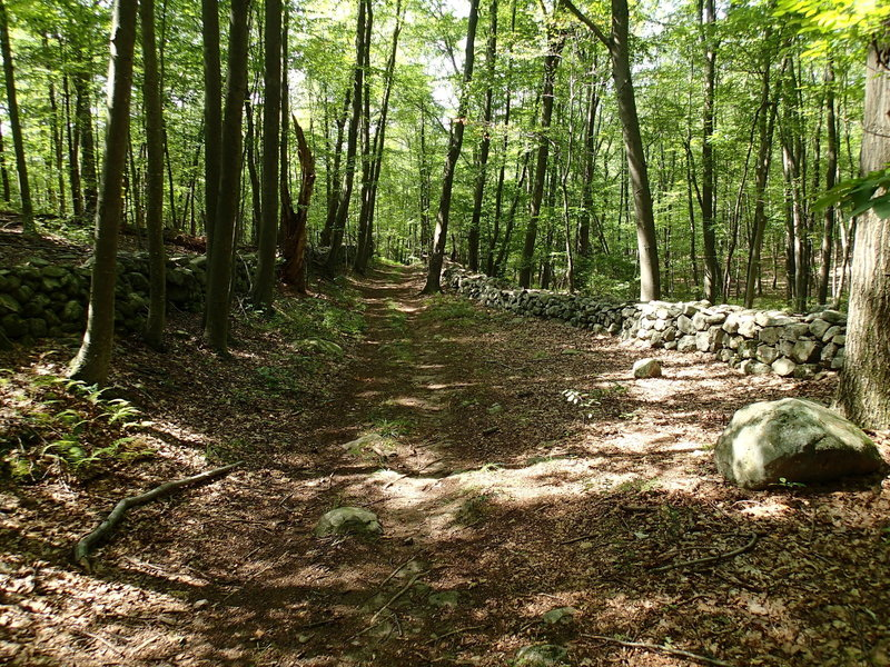 Old stone wall along the Hubbard Loop Trail