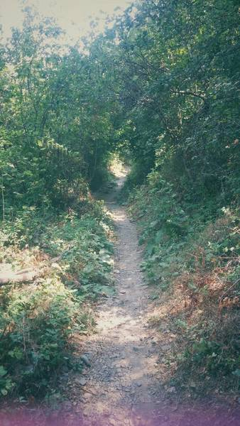 The Green Tunnel...one of our favorite spots to go near the Wilber Trailhead off of Seven Mile. Beautiful scenery!