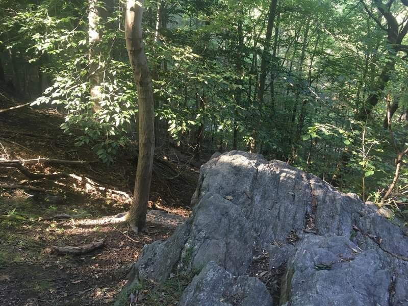 Top side of the large boulders along Pennypack Creek
