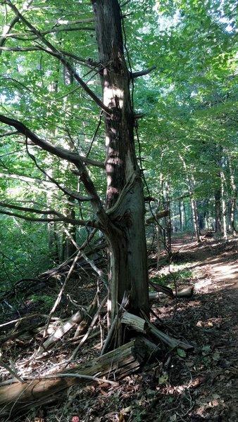 A  Beautiful tree cut in half