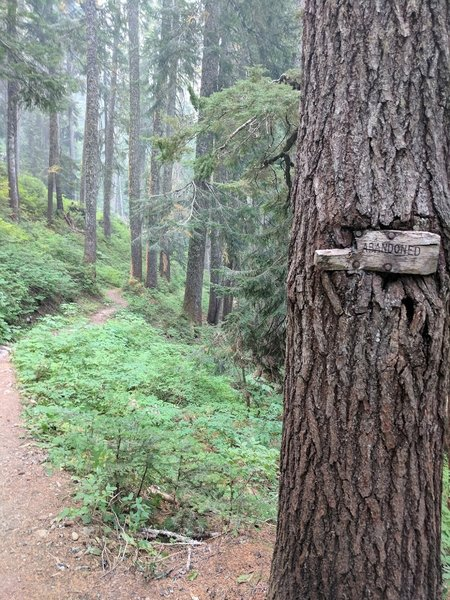 Abandoned Sign Heading Back onto the Cascade Crest Trail
