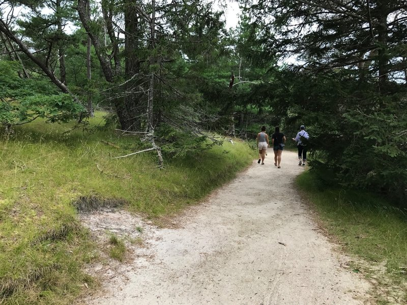 A nice, wide path along the Silver Spring Trail; great for anyone!