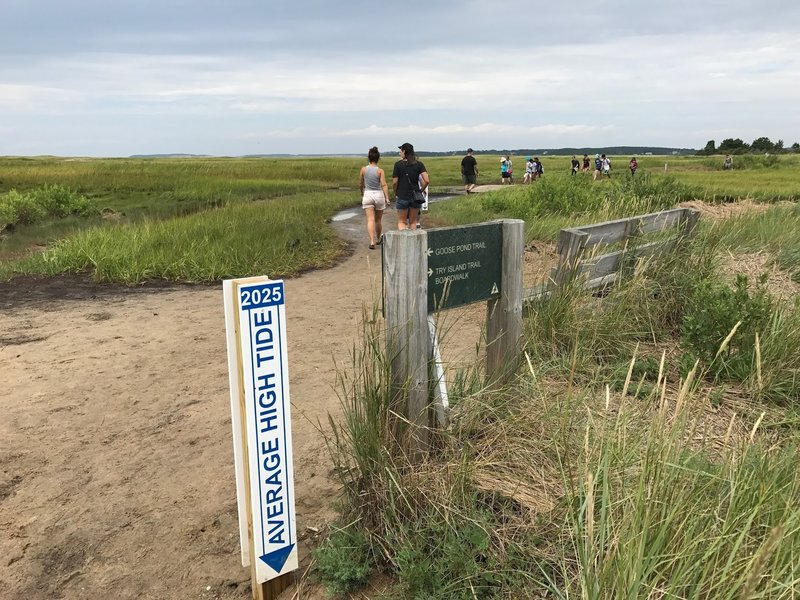 Average high tide marker for 2025 and the intersection of Goose Pond Trail and Try Island Trail.