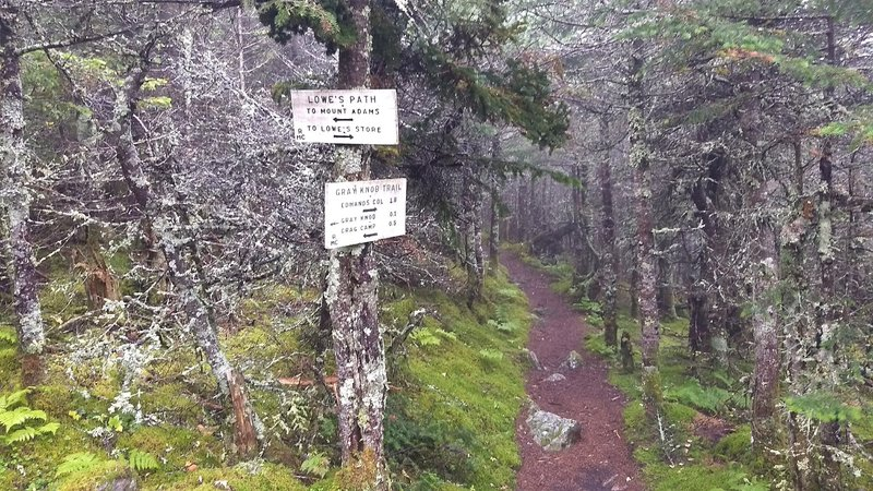 This nice looking dirt path is not typical of the terrain you'll find on these trails. It's much more rocky than this.