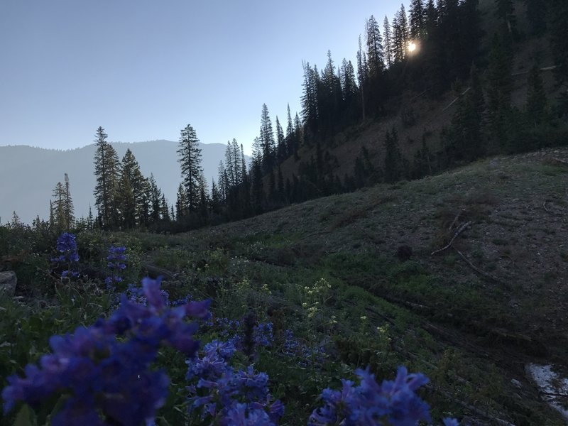 Wildflowers galore! Full bloom in the mountains is typically in July.