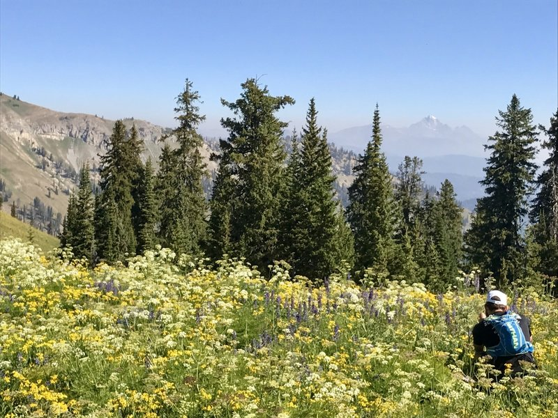 At the intersection to Overall Basin, Overall Ridge, and the Garden Ridge trails. The Grand Teton in the background and some floral photography in the foreground. :)