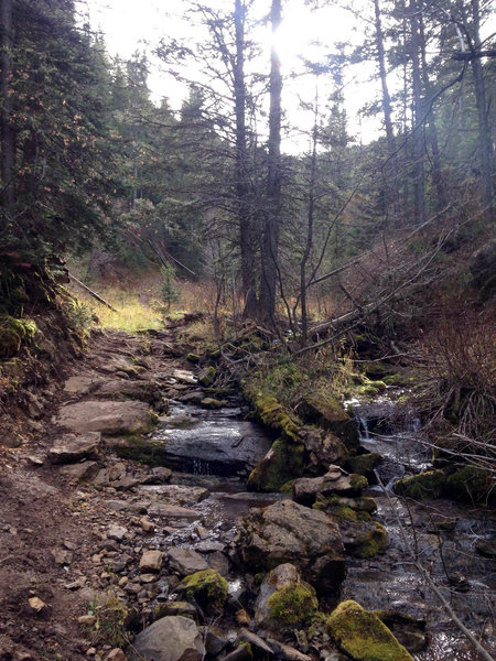 Don't let the pretty stream and flat-ish trail fool you... New World Gulch is awful.