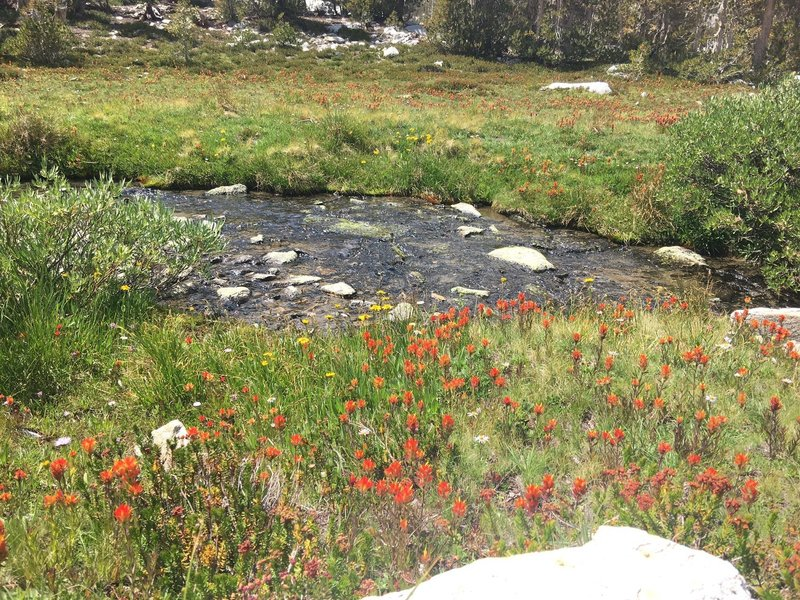 Lots of wildflowers on the way to Gem Lake.