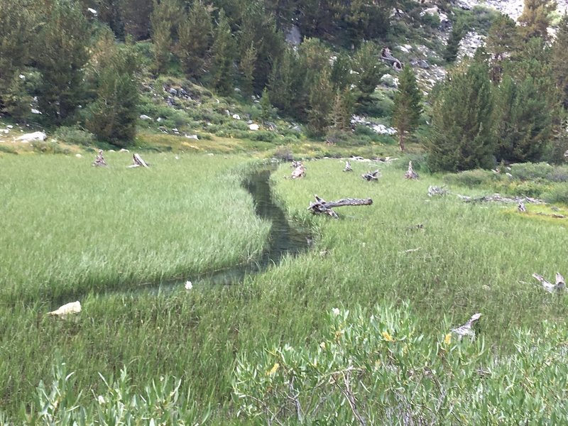 Stream going thru a lush meadow - Along the trail to Gem Lake and Morgan Pass.