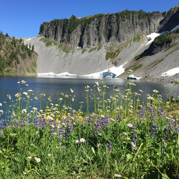 Looking across Iceberg Lake at the last remaining bit of a snow field. Wildflowers in full bloom on September 1.