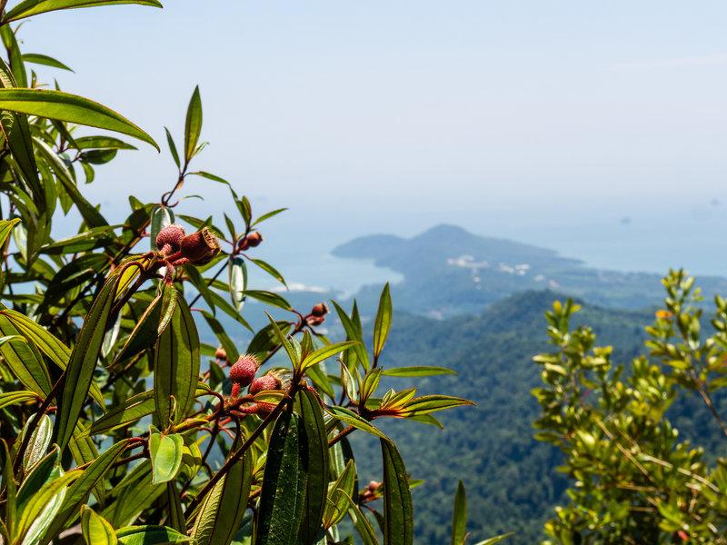 Foreground - vegetation; background - western Krabi peninsula.